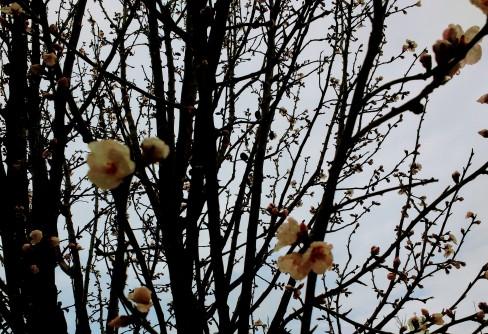 mandelbaum.jpg